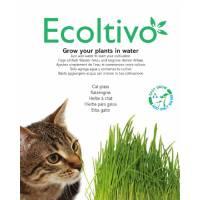 Nepeta Cataria (Erba Gatta) - Ecoltivo