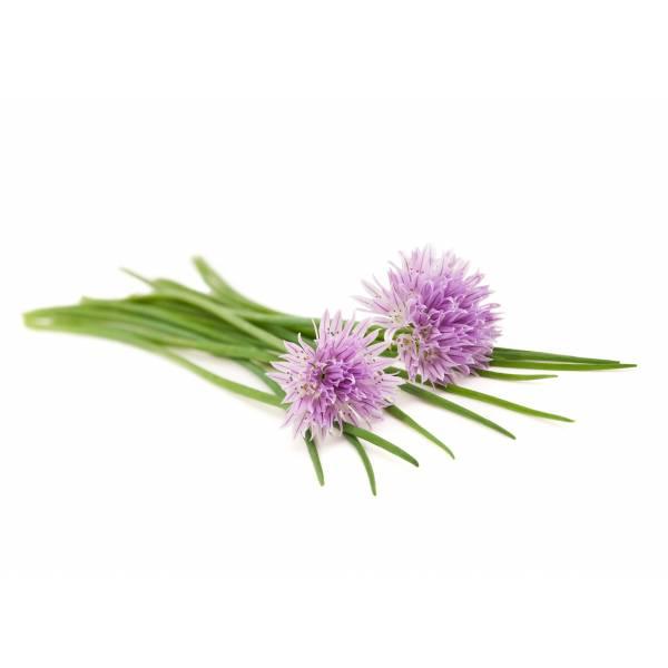 Piante Di Erba : Semi di erba cipollina