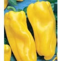 Seme di peperone Nocera giallo