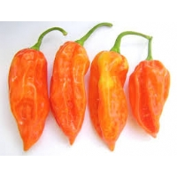 Semi di peperoncino Bhut Jolokia Peach