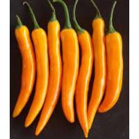 Semi di peperoncino Bulgarian Carrot