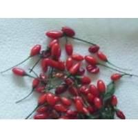 Semi di peperoncino Catarina