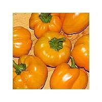 Semi di peperoncino Cueño