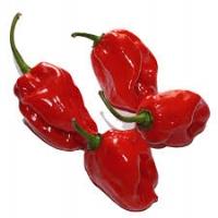 Semi di peperoncino Habanero Red