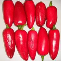 Semi di peperoncino Jalapeño Conchos